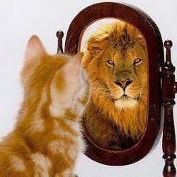 Cat admiring self in mirror.