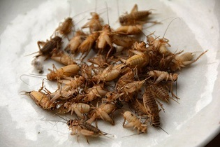 Plate of crickets.