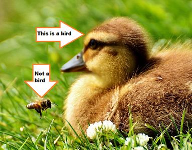 duckling_bee_383x300