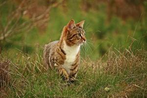 kitten_cute2_750x500
