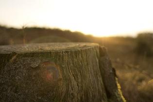 stump_315x210